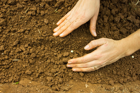 Planting, Sowing - Woman Hand Covering Seeds into the Soil