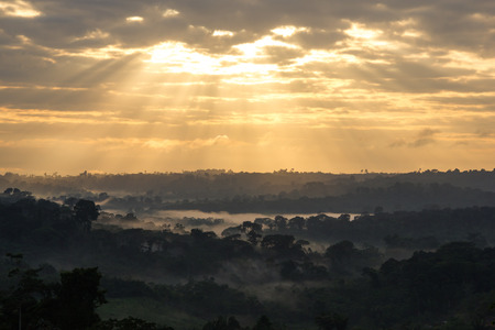 amazon rainforest: Sunrise view of Amazon Rainforest in Brazil Stock Photo