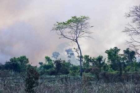 prohibitions: Brazilian Amazon Forest burning to open space for pasture