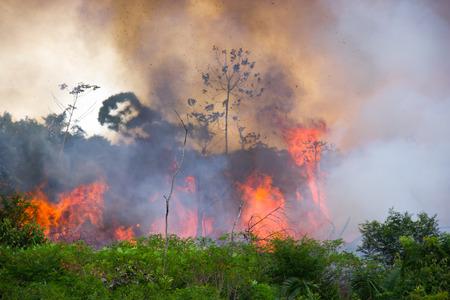 Brazylijski las Amazonii spalania, aby otworzyć przestrzeń dla pastwiska Zdjęcie Seryjne