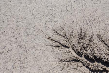 dry cracked desert ground texture