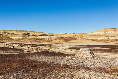 petrified wood, tree stump in the desert, climate change, global warming Stock Photo