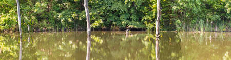 Panorama of dried and submerged trees in the lake