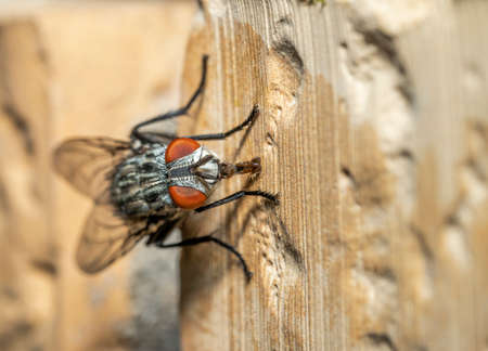 A fly stands on the wall of the building Standard-Bild