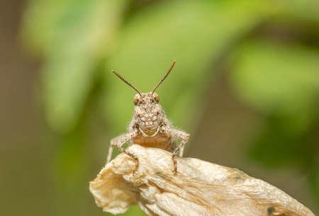 A grasshopper stands on the grass in a field Standard-Bild