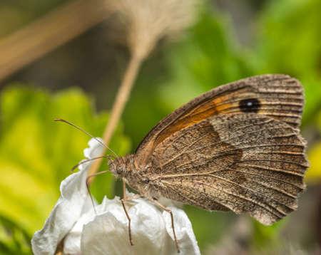 A butterfly stands on a white flower in a field Standard-Bild