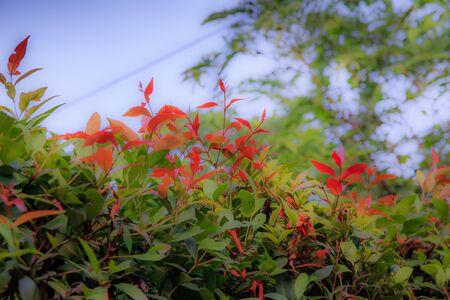 hojas de colores: hojas de colores de fondo Foto de archivo