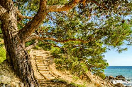Spreading tree on the beach and a wooden staircase. Summery. Tourism and hiking.