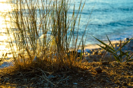 Light bulb in grass against the sea. Summery.