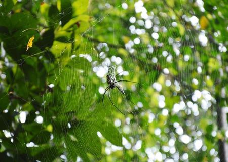 spider net: spider net