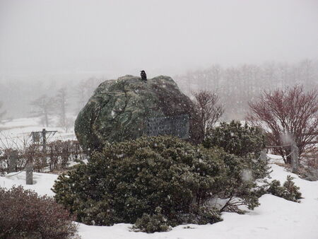 crow on the rock under snow falling photo