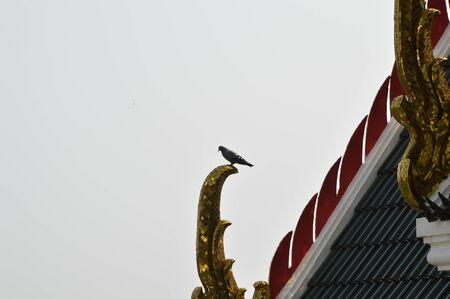 apex: pigeon on the gable apex