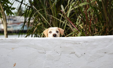 peek: dog peek behind white wall