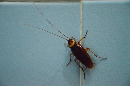 water sanitation: cockroach on bathroom wall