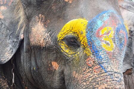 herbivore: painting on elephant Stock Photo
