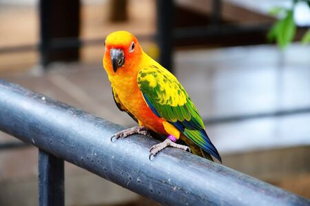 herbivore: parrot on iron log