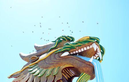 oiseau mouche: vol�e d'oiseaux sur l'eau gicle du dragon