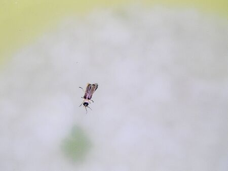 glowworm: firefly on the water