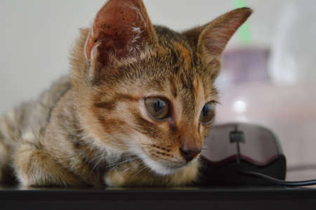 lap top: kitten  on lap top Stock Photo