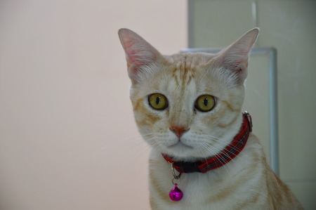dilate: cat dilate his eyes