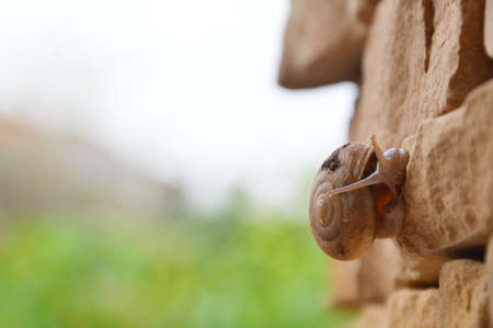 clod: snail crawl slowly on the wall