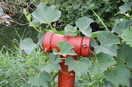 inoperative: red fire hydrant cover by weed Stock Photo