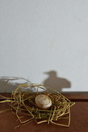 grownup: white egg on the nest and bird shadow Stock Photo