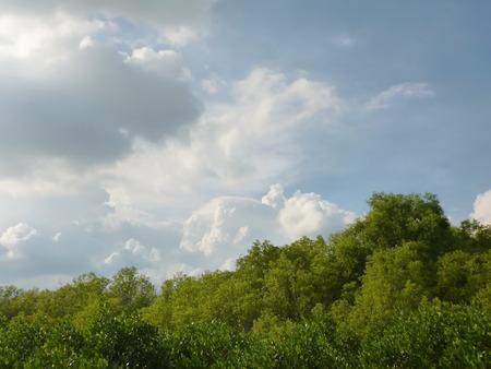 mangrove forest: mangrove Forest
