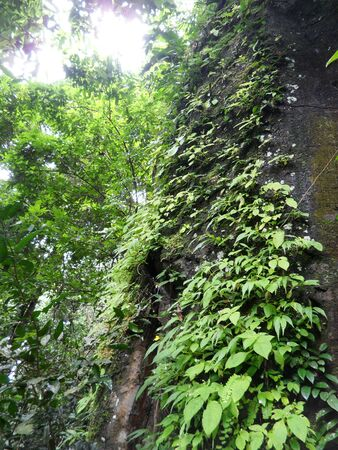 climbing plant: climbing plant on the tree Stock Photo