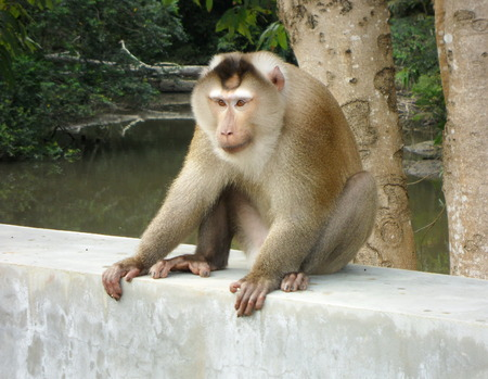 intruder: monkey on cement wall