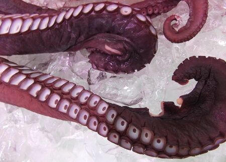 fishery products: octopus on ice in the market