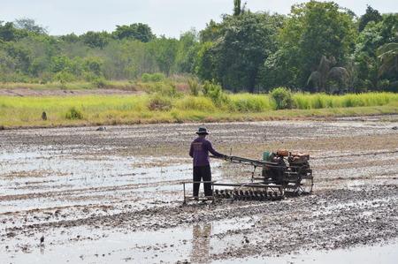 carretilla de mano: Pathumthanee Tailandia 12 de mayo 2015: El granjero tailand�s en carretilla de mano en el campo de arroz Editorial