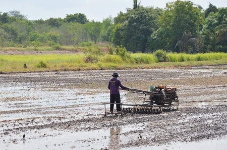 pushcart: Pathumthanee Thailand May 12, 2015 : Thai farmer on pushcart in paddy field