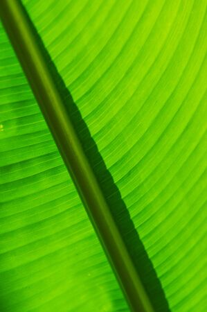 garden green: garden green texture