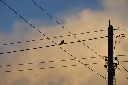electricity pole: silhouette bird between electricity wire cable Stock Photo