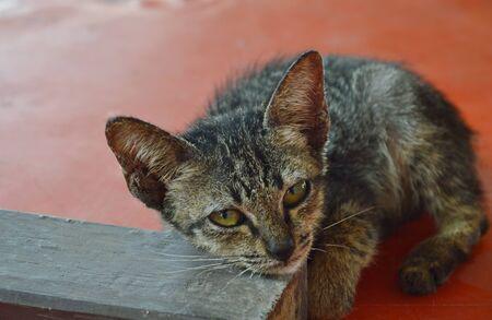 baby  pussy: kitten lay on little wooden board
