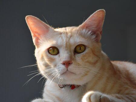 ginger cat: ginger cat and morning sunlight