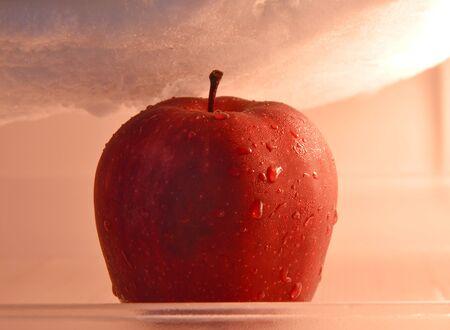 refrigerator: apple in refrigerator