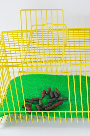 rabbit in cage: rabbit food in yellow cage
