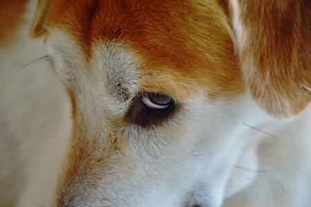 glance: dog glance feeling be shy