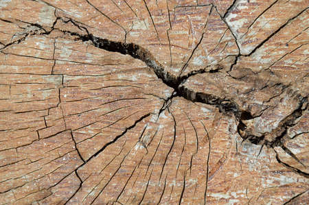 crevice: wood cut texture and background