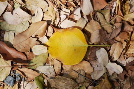 dry leaf: dry leaf falling on the ground Stock Photo