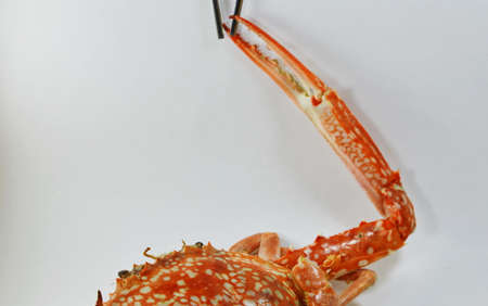 blue swimmer crab: steamed flower crab nipper catch on stainless chopstick