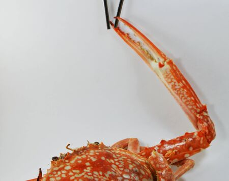 blue swimmer crab: steamed blue crab nipper catch on stainless chopstick