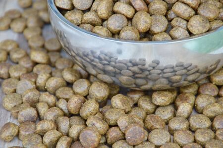 pet food: pet food in circle stainless bowl