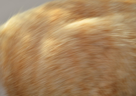 ginger cat: blurry of ginger cat fur texture Stock Photo