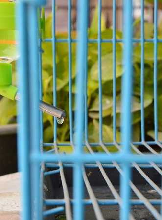 the drinker: pet automatic drinker mobile in wire cage