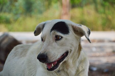 semicircle: white dog with black semicircle fur on head in garden
