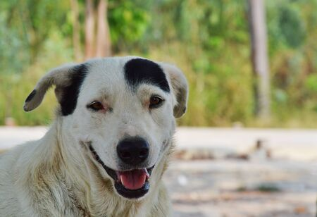 semicircle: white dog with black semicircle fur on head in park