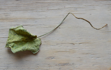 depress: dry lotus leaf on wooden board